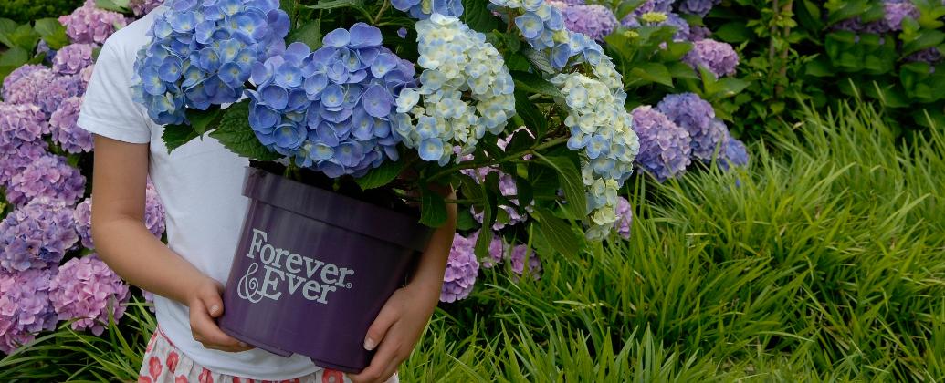 ForeverEver-Slider